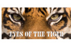 Tiger Eyes Vehicle Window Graphic